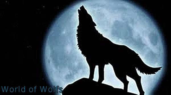 World of Wolfs